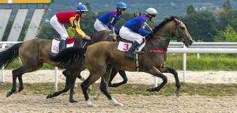 Hästkapplöpning för priset i Pyatigorsk Arkivbilder