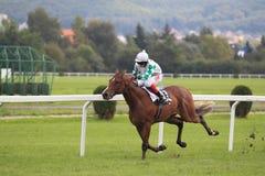 Hästkapplöpning - grand prix i Prague Royaltyfria Bilder