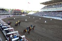 Hästkapplöpning på den Calgary rusningen arkivfoton