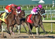 Hästkapplöpning på Gulfstream Park Florida Royaltyfri Bild