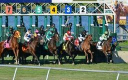 Hästkapplöpning på Gulfstream Park Florida Royaltyfria Bilder