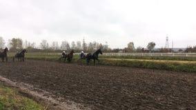 Hästkapplöpning på löparbanan arkivfilmer