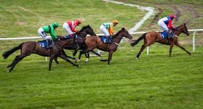 Hästkapplöpning Stratford England Royaltyfri Foto