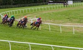 Hästkapplöpning Stratford England royaltyfri bild