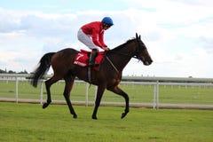 Hästkapplöpning Yorkshire, England Royaltyfria Bilder