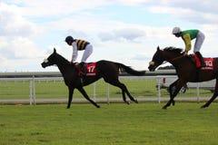 Hästkapplöpning Yorkshire, England Royaltyfri Fotografi