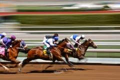 Hästkapplöpningar royaltyfri fotografi