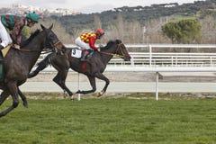 Hästkapplöpningfinalen rusar Konkurrenssport hippodrome Vinnare royaltyfria foton