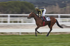 Hästkapplöpningfinalen rusar Konkurrenssport hippodrome Vinnare Sp arkivbilder