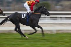 Hästkapplöpningfinalen rusar Konkurrenssport hippodrome Vinnare Sp royaltyfri bild
