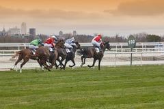 Hästkapplöpningfinalen rusar Konkurrenssport hippodrome Vinnare Sp fotografering för bildbyråer