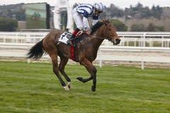 Hästkapplöpningfinalen rusar Konkurrenssport hippodrome Vinnare Var arkivbilder