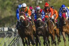 Hästkapplöpninghandling Arkivbild