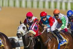 Hästkapplöpninghandling Arkivfoton