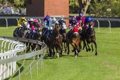 Hästkapplöpninghandling Royaltyfri Foto