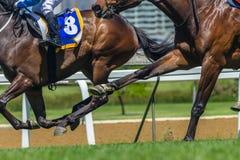 Hästkapplöpninghandling traskar benskor Royaltyfria Bilder