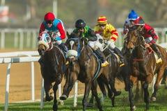 Hästkapplöpningjockey Action Royaltyfria Bilder