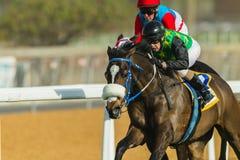Hästkapplöpningjockey Action Arkivfoton