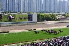 Hästkapplöpningkonkurrens royaltyfria bilder