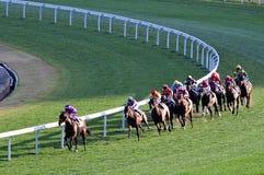Hästkapplöpningkonkurrens royaltyfri fotografi