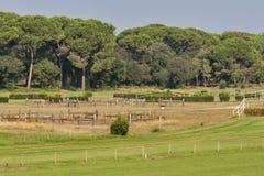 Hästkapplöpningspår Arkivbilder