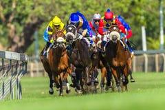 Hästkapplöpningspringhandling Royaltyfri Bild