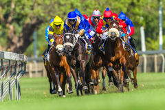 Hästkapplöpningspringhandling Arkivbilder