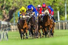 Hästkapplöpningspringhandling Fotografering för Bildbyråer