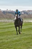 Hästkapplöpningutbildning Konkurrenssport hippodrome arkivbilder