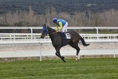 Hästkapplöpningutbildning Konkurrenssport hippodrome fotografering för bildbyråer
