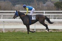 Hästkapplöpningutbildning Konkurrenssport hippodrome arkivbild