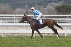 Hästkapplöpningutbildning Konkurrenssport hippodrome angus arkivfoton