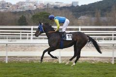 Hästkapplöpningutbildning Konkurrenssport hippodrome hastighet royaltyfri bild