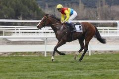 Hästkapplöpningutbildning Konkurrenssport hippodrome hastighet royaltyfria bilder