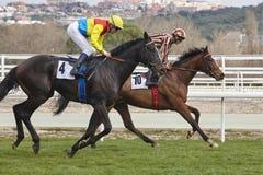Hästkapplöpningutbildning Konkurrenssport hippodrome hastighet arkivbilder