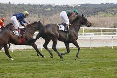 Hästkapplöpningutbildning Konkurrenssport hippodrome hastighet royaltyfri foto