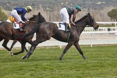 Hästkapplöpningutbildning Konkurrenssport hippodrome hastighet fotografering för bildbyråer