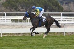 Hästkapplöpningutbildning Konkurrenssport hippodrome hastighet arkivfoto