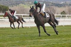 Hästkapplöpningutbildning Konkurrenssport hippodrome Vinnare arkivbilder