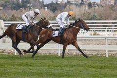 Hästkapplöpningutbildning Konkurrenssport hippodrome Vinnare spee arkivbild