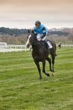 Hästkapplöpningutbildning Konkurrenssport hippodrome Vinnare spee royaltyfria bilder