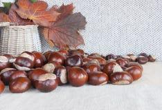 Hästkastanjer eller conkers på tabellen, korg med höstleav Royaltyfri Foto
