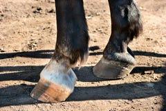 Hästklövar Royaltyfria Foton