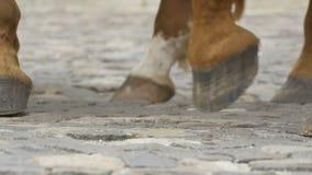 Hästklövar på kullersten lager videofilmer