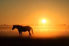 Hästkontur på en bakgrund av gryning Royaltyfria Bilder
