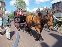 Hästlagledare med turister i Amsterdam Arkivbilder