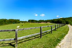 Hästlantgård nära Bilovice arkivbild
