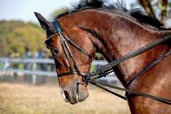 Hästlantgård, trevliga rena häststall royaltyfria foton