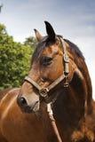 Hästlantgård, trevliga rena häststall Fotografering för Bildbyråer
