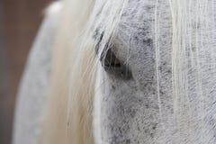 Hästlantgård, trevliga rena häststall Royaltyfri Bild